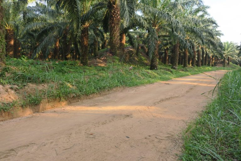 Refus de Groupe Blattner Elwin (GBE) de dialoguer avec les parties prenantes : Du couac dans la perspective d'une exploitation durable dans le développement de l'agro-industrie dans l'ancienne province de l'Equateur/RDC.